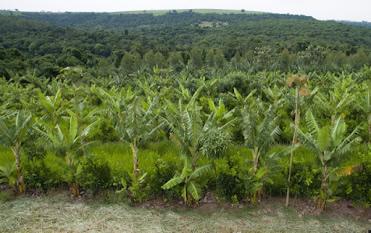Agroforestry visit