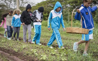 Inside Toca Institute's projects: Dulce school's vegetable garden